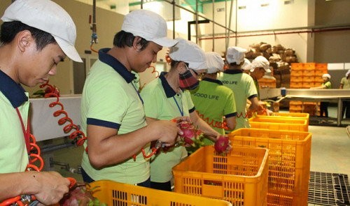 JAPANESE FIRMS TO BOOST INVESTMENT IN VIETNAM AGRICULTURE: EMBASSY OFFICIAL